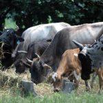 Proleche luchó contra el contrabando de lácteos en el pasado porque competían en condiciones desiguales con los productores salvadoreños. Foto EDH/