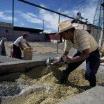 El sector cafetalero se ha enfrentado a diversos problemas en los últimos años. Foto EDH/ archivoUna banca amiga y cercana es el principal distintivo de los corresponsales bancarios del Agrícola. Foto EDH/ archivo