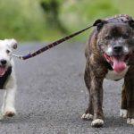 Glenn, el perro ciego y su guía