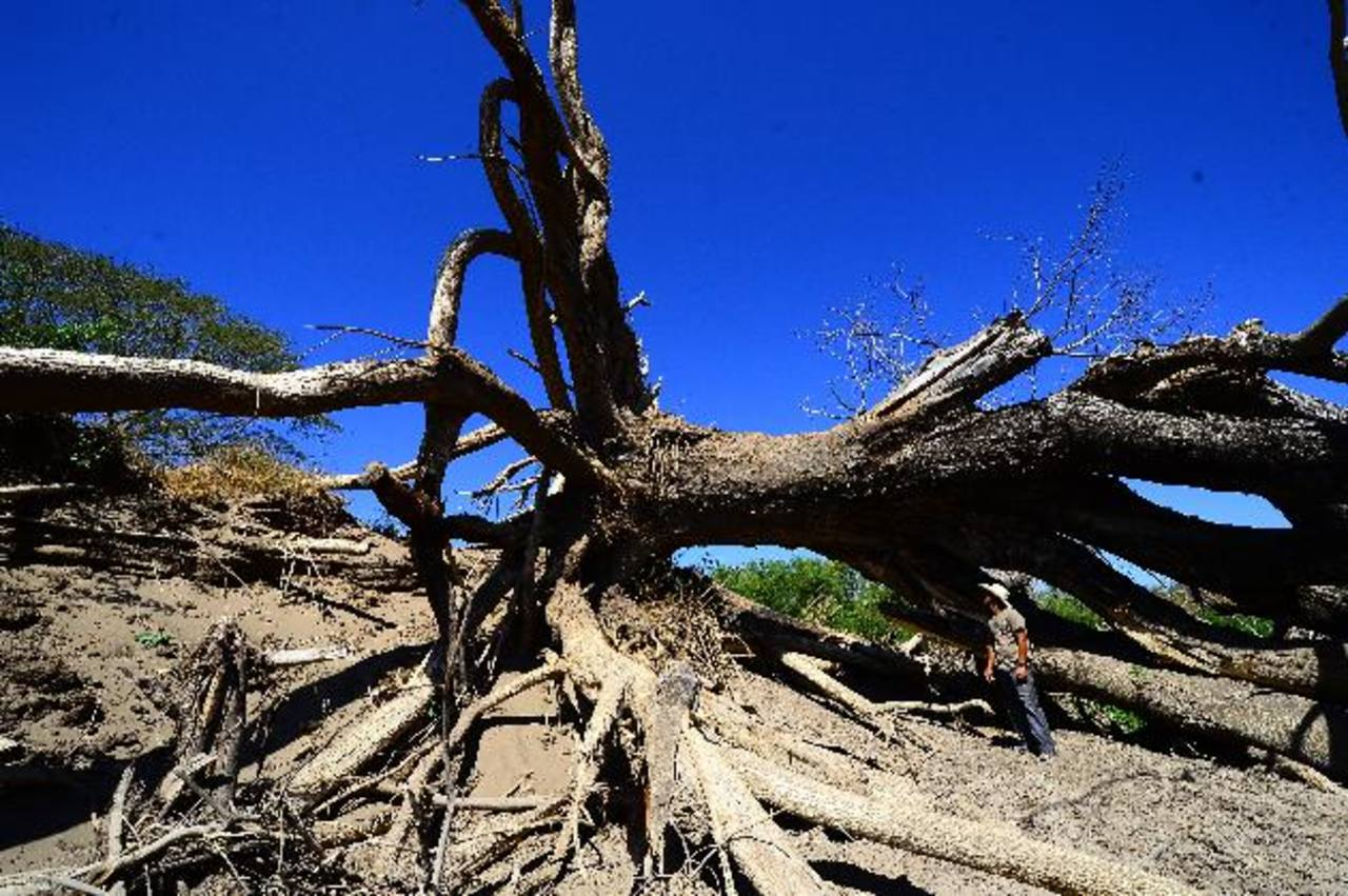Si cualquier funcionario sabe sobre un posible daño ambiental, tiene la obligación de denunciarlo. Foto EDH / Archivo