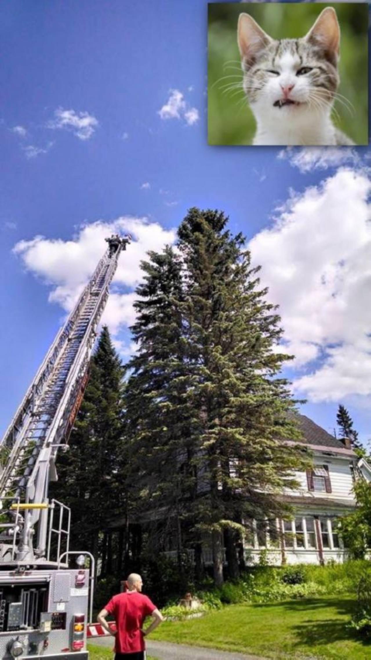 Sube a árbol de 22 metros para rescatar gato y luego no puede bajar