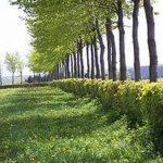 Arte y belleza de arbustos en cualquier sitio
