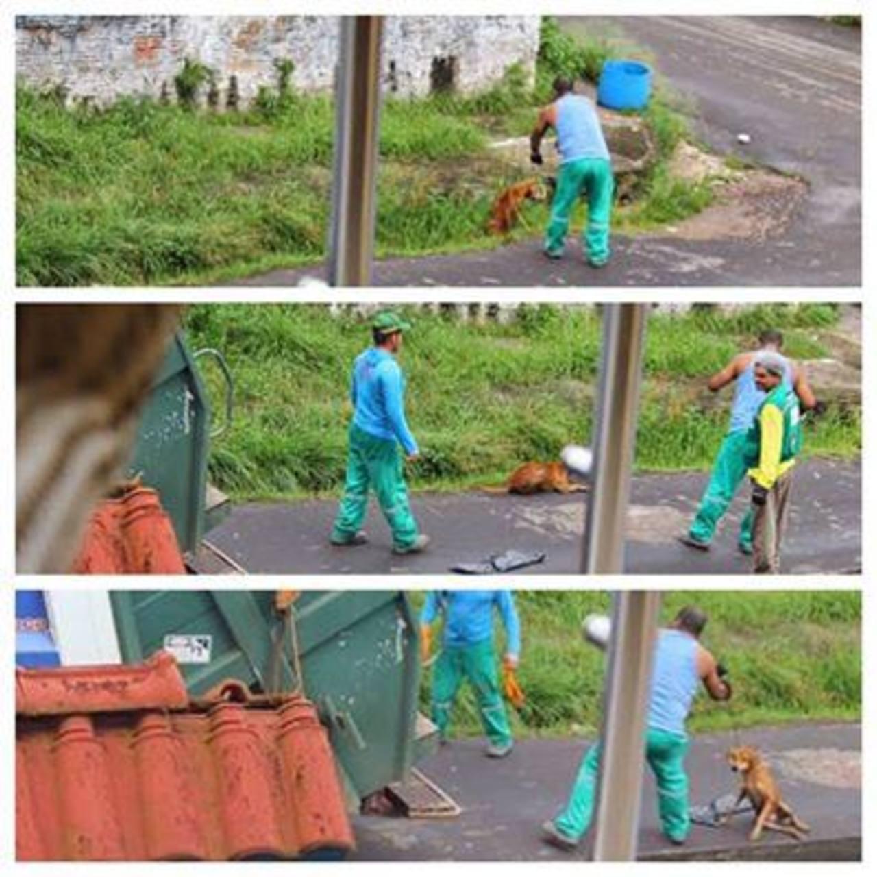 Hombre mata a perro y causa indignación en Brasil