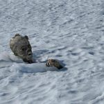 Montañistas hallan cuerpo momificado en volcán de México