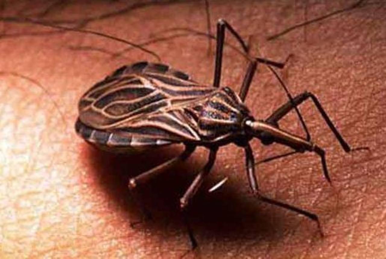 El Chagas afecta a 80,000 personas en Europa