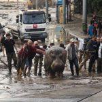 Tigres, leones, un hipopótamo y otros animales escaparon del zoológico de la capital de Georgia después de que las intensas lluvias destruyeran sus recintos.