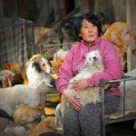 Mujer salva a 400 animales del Festival de carne de perro en sur de China