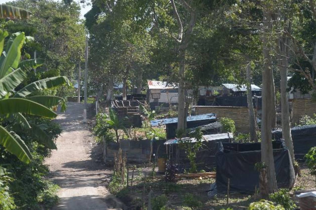 La comunidad Rutilio Grande está ubicada en el kilómetro 17 y medio de la carretera de Oro, San Martín, en un terreno propiedad de Ciudad Mujer. Foto EDH / Archivo