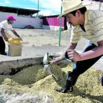 Café y lácteos fueron las principales exportaciones de Guatemala hacia Noruega en 2014. Foto EDH/ Archivo