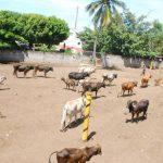 Según el alcalde Miguel Pereira, hay algunas mejoras en viejo rastro, pero estas son en cuanto al manejo de carnes, porque recibieron quejas de extravío del producto. Por ahora los comerciantes de carnes seguirán usando el referido lugar para el dest