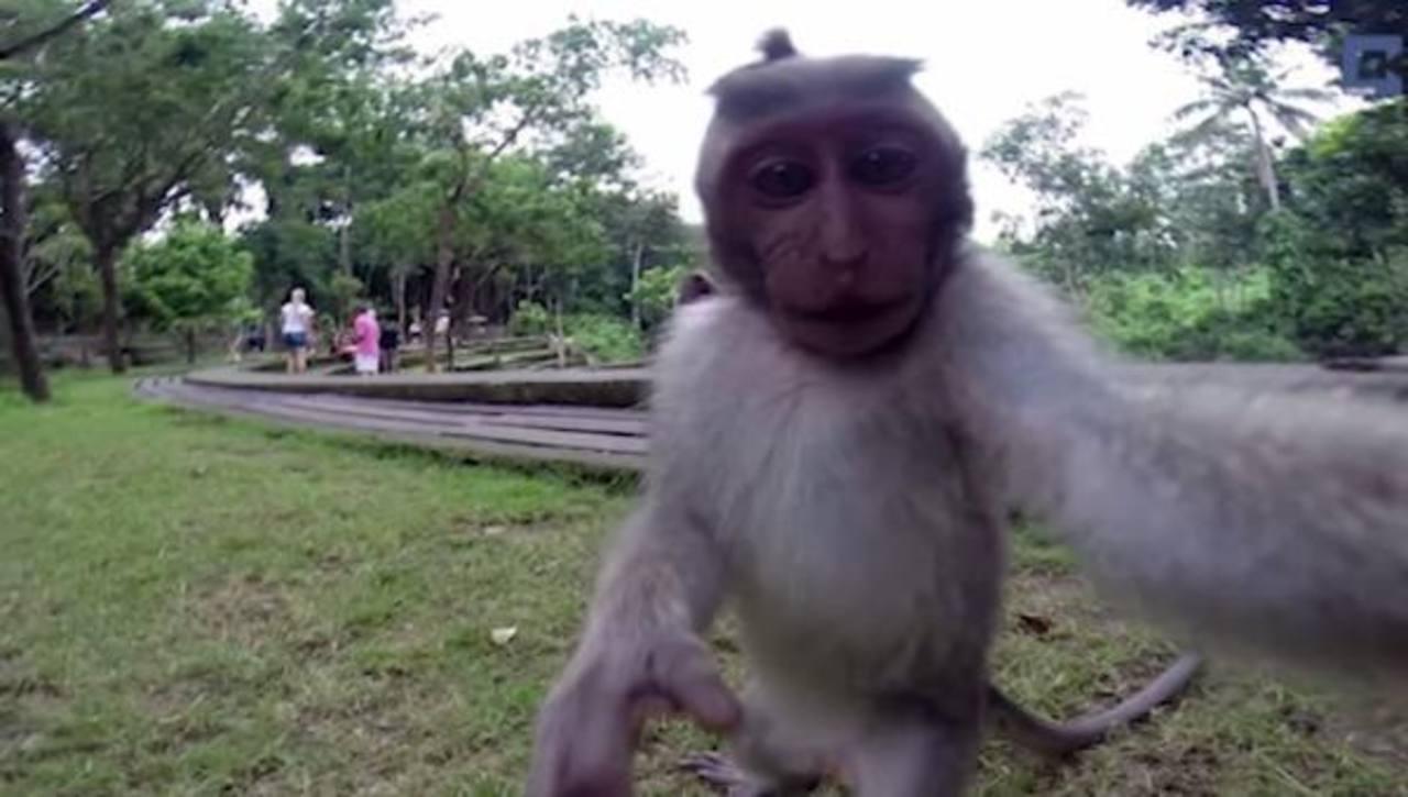 Mono roba la cámara de una turista y se toma una selfie