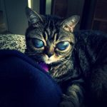 Video: ¿Conoces a Matilde, la gata alien?