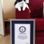 Video: ¿Conoces a Marlín, el gato del ronroneo más fuerte del mundo?