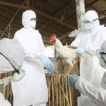 El brote actual de H5N2 comenzó en diciembre en Canadá y poco después se extendió al Pacífico de EE. UU. FOTO/EDH