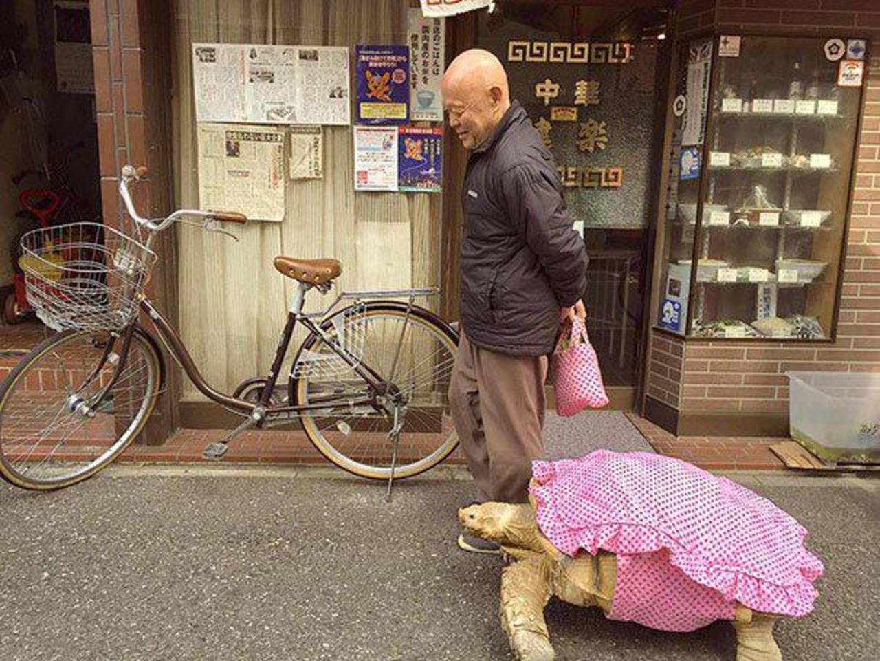 Fotos: ¿El más paciente? Japonés saca a pasear tortuga