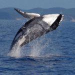 Los mamíferos marinos como las ballenas tienen más probabilidades que los moluscos de extinguirse.