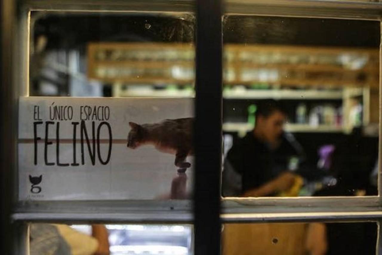 """FOTOS: """"Cat café"""", el primer espacio felino en Latinoamérica"""