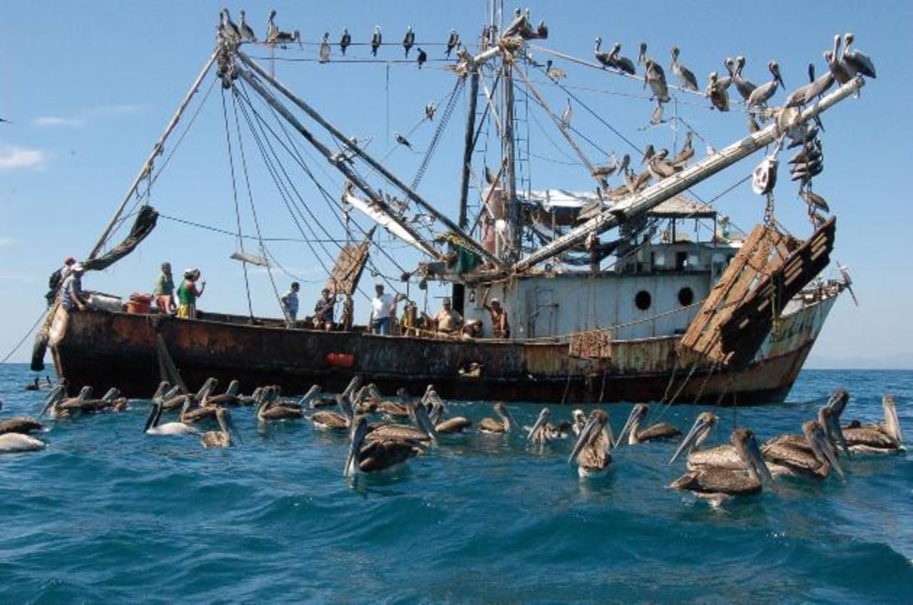 Cendepesca ya tiene listo el estudio para la veda, implementar la prohibición de pesca de camarón corresponde al Ministerio de Agricultura y Ganadería (MAG). Foto edh / Archivo