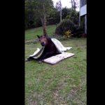 VIDEO: Rumba, el caballo de Australia que ha conquistado las redes sociales