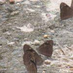 Cientos de mariposas vuelan sobre San Salvador