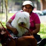 Penalización del maltrato animal