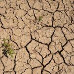 Los niveles de humedad del suelo continúan a la baja por la falta de lluvia. Foto EDH/ Archivo