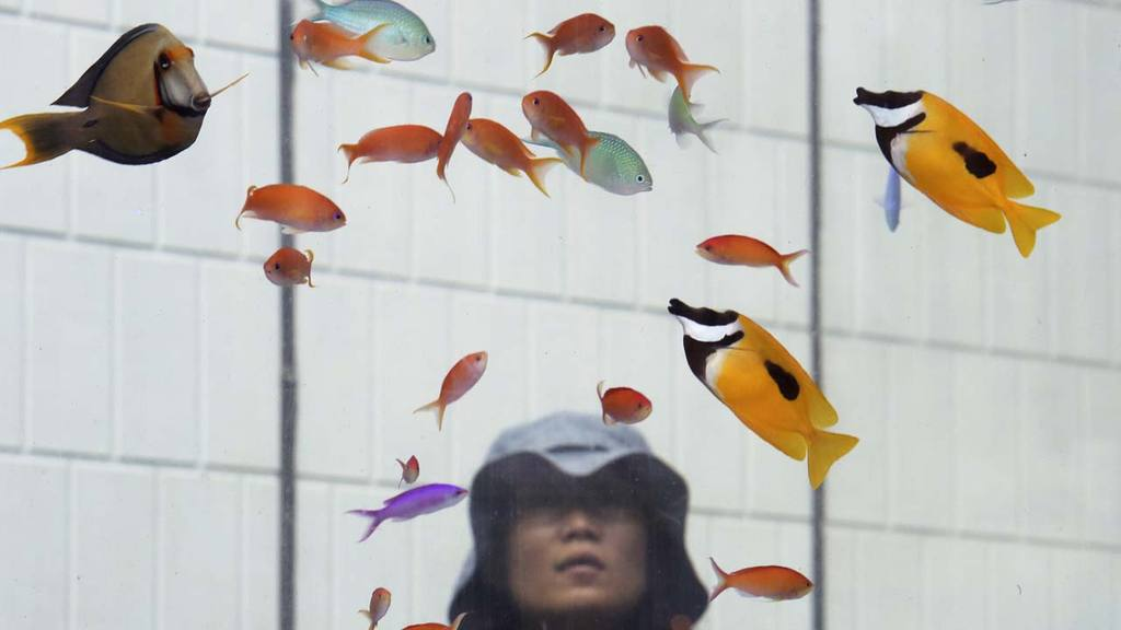 A woman watches tropical fish from Okinawan sea on display in a glass