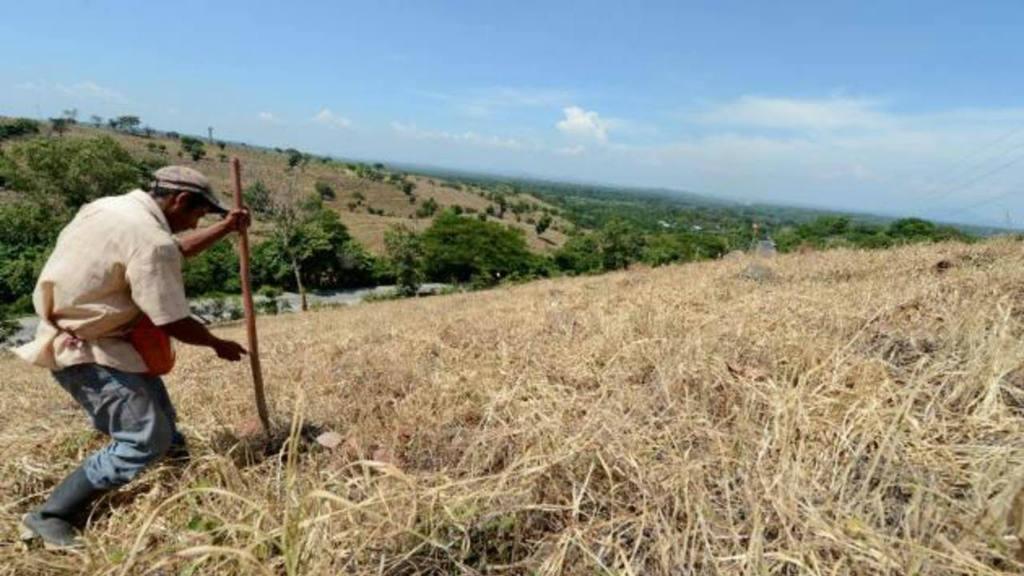 Al menos 850.000 personas afectadas por la sequía en Honduras, según Unicef