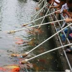 Peces en China comen por medio de biberones