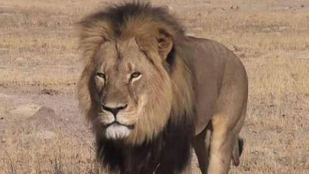 León Cecil