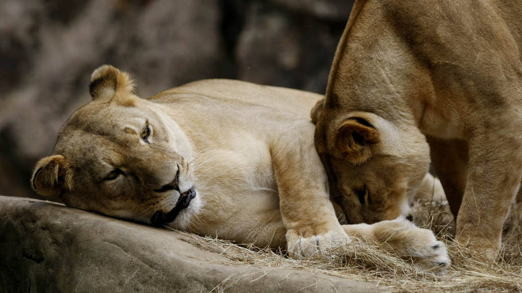 Zoológico de Calí