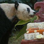 Panda más vieja del mundo