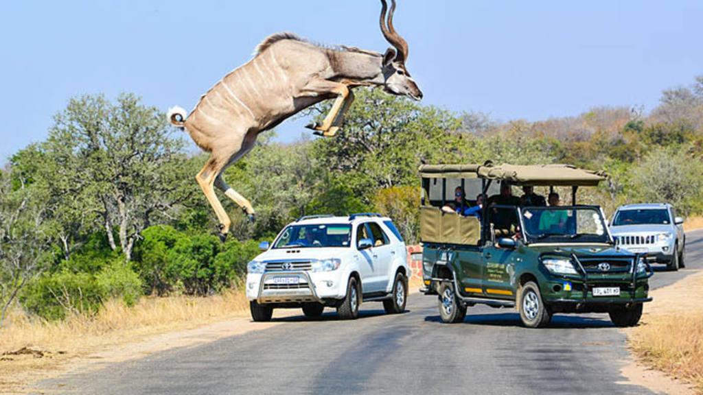 Salto de kudú