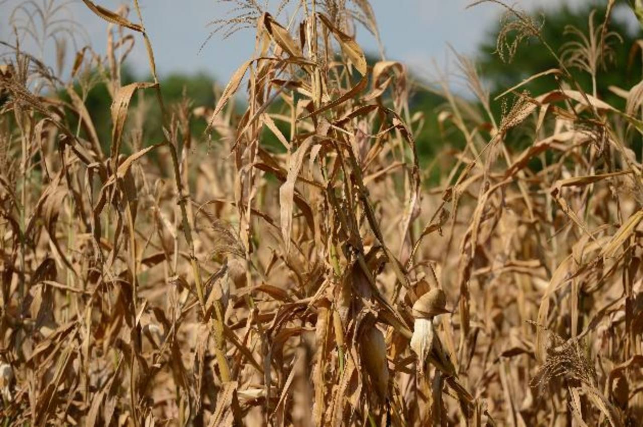 Mediante su mecanismo de negociación, Bolpros ha ayudado a agricultores durante tiempos de sequía