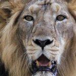 Mueren 10 leones por inundaciones en India