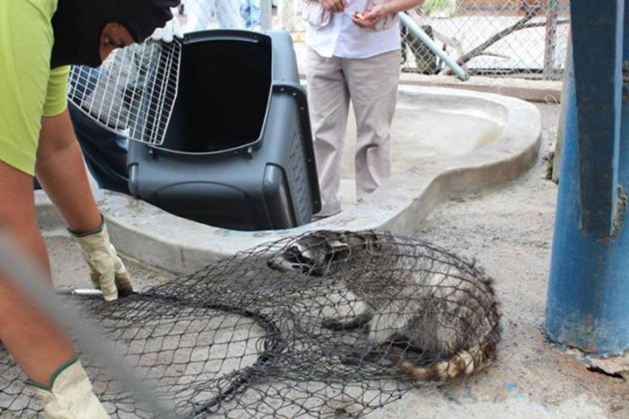 Decomisan animales en riesgo de extinción