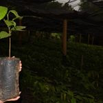 Inicialmente 16 familias son las beneficiarias de este proyecto alternativo al cultivo del café. Foto EDH/ Cristian Díaz