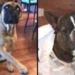 Perro acusa a compañero del desorden en la casa