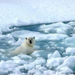 36 Premios Nobel reclaman a líderes del mundo actuar contra cambio climático