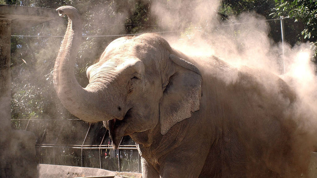 Manyula, parque zoológico nacional
