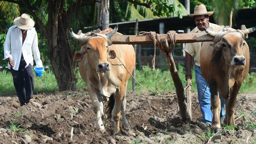 Agricultores salvadoreños