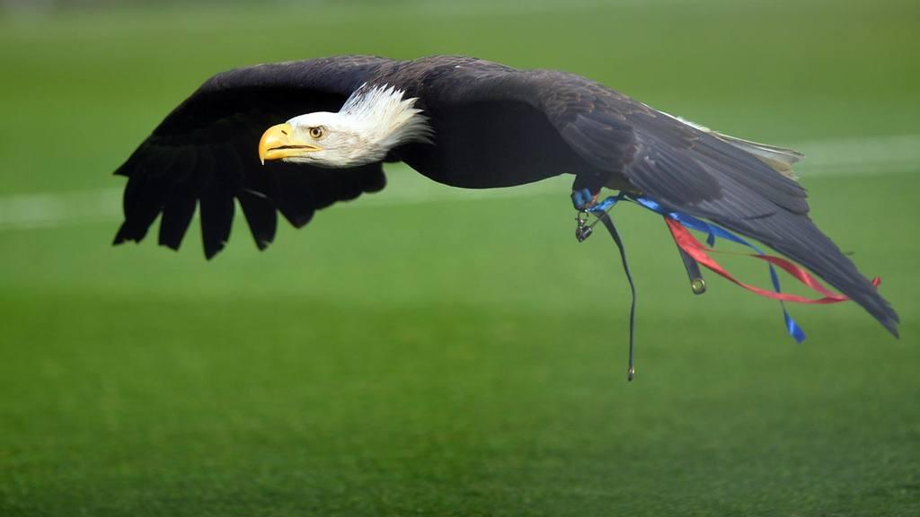 Águila del Crystal Palace