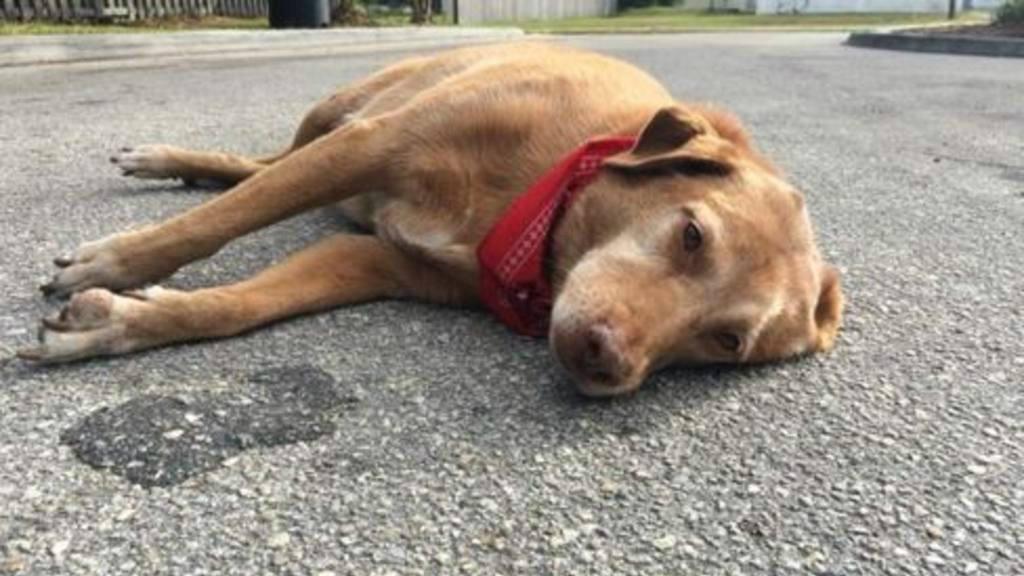 Paco, el perro que esperó a su ama