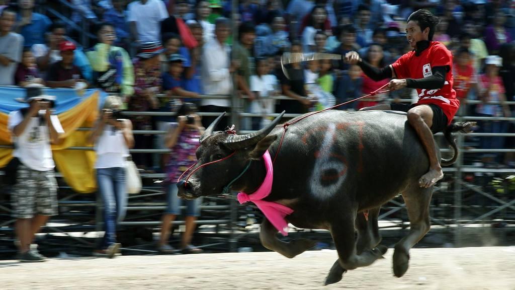 Festival del búfalo