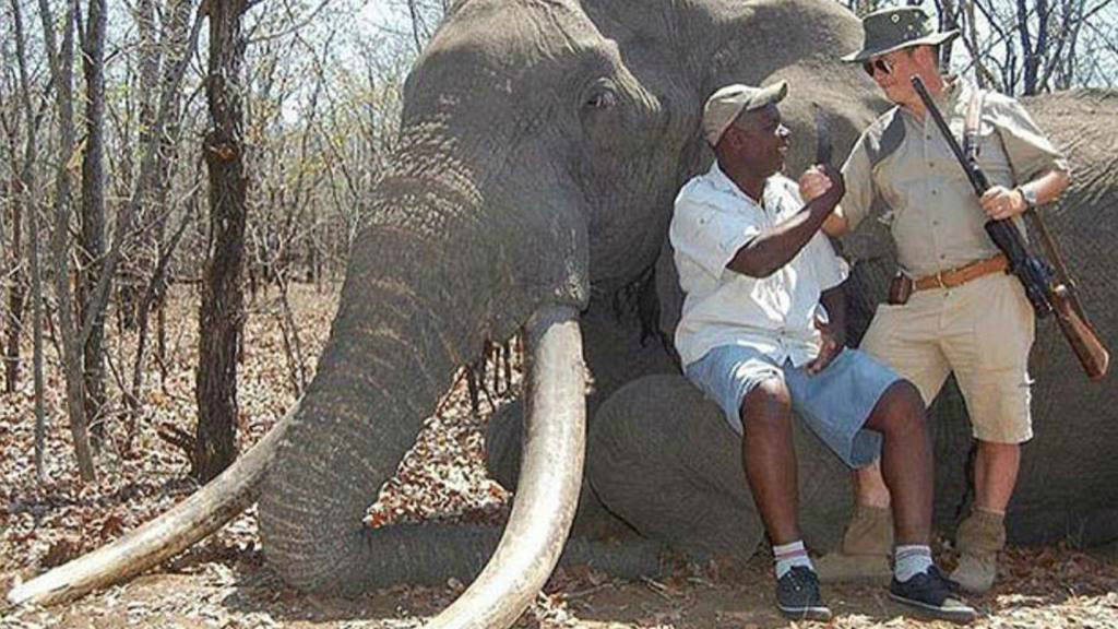 Elefante Toro