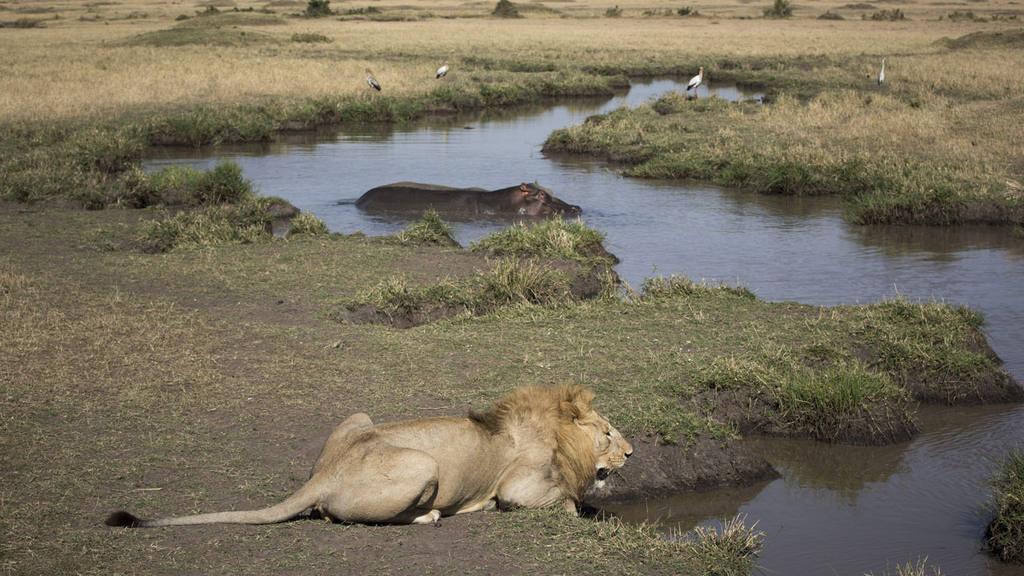 ANIMALES EN KENIA