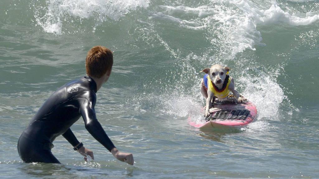 Perros surfistas