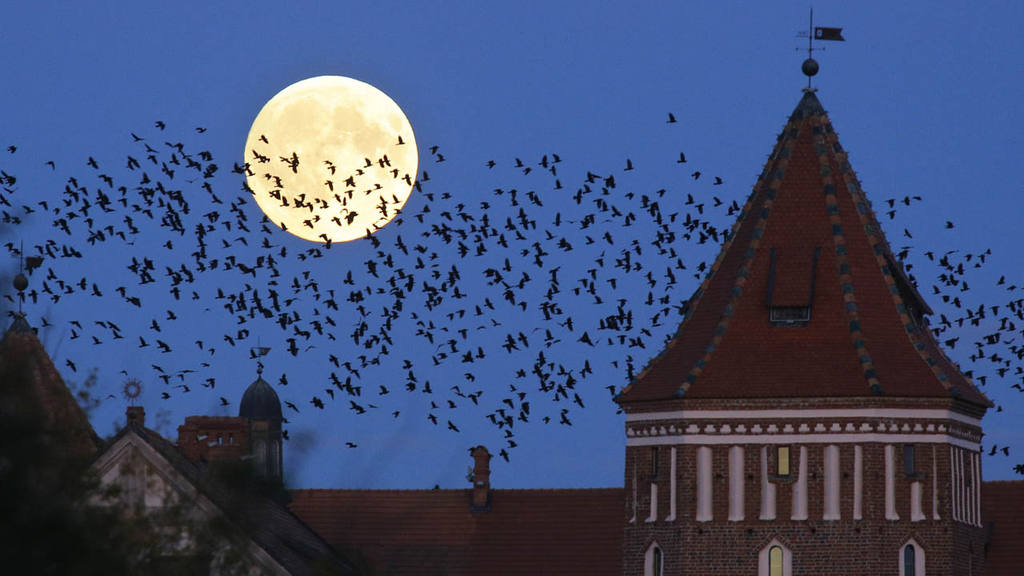 A  flock of birds fly by as perigee moon