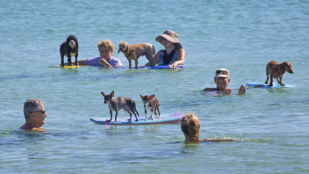 Beach goers enjoy a day floating with their dogs at Haulover Beach Pa
