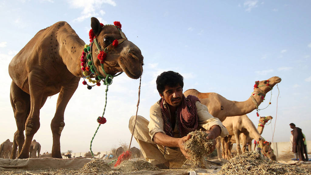 Eid al-Adha preparations in Pakistan